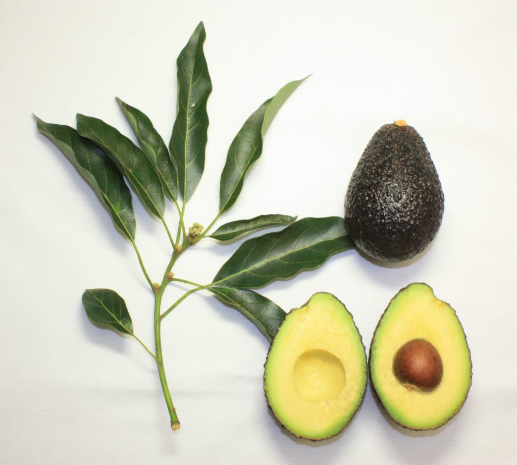 Eating Avocado Often? Watch This Video Before You Throw Away The Pit
